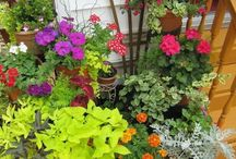 The Art of PATIO GARDENING / Ideas for simplifying and beautifying, my style, my patio garden. Less fuss.