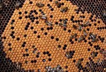 Minas Beekeeping