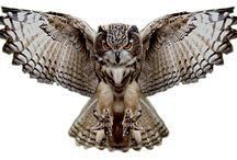 owl love / by Katie Nolan