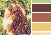palettes of color