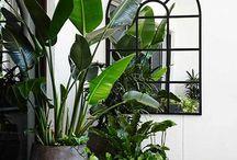 Maison / Deco, decoration, maison, plantes, agencement