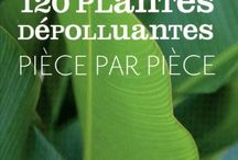 Plantes depolluantes