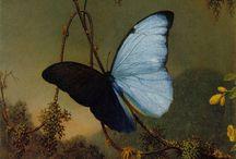 Butterflies /