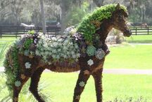 Horsing Around in the Garden / Succulent Horse Topiary