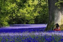 Nature | Magical Lanes and Woodland / Daffodils, bluebells and other flowers carpeting woodland and the edges of country lanes