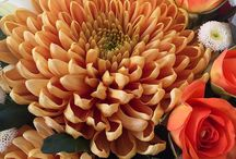 Daily Inspiration / A daily dose of beautiful flowers and everyday visual inspiration.