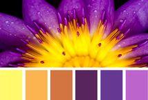Design seeds color