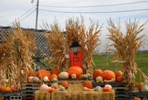Pumpkin Patches USA / Find the most popular pumpkin patches in your state.  Lots of cool fall activities including pick your own pumpkins, petting zoos, hayrides, and Halloween fun.