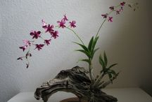 Orchidea project
