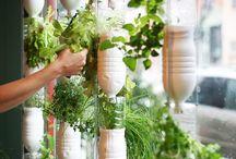Urban gardening / Indendørs planter og urter