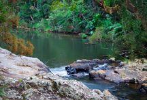 Eungella National Park – best place in Australia to see wild platypus