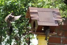 birds / pvc pipe birds