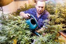 CBD Dispensaries - Medical Marijuana News & Laws