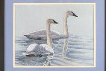 Dimension swans