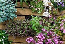 Rock wall garden flowers