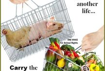 Animal rights banners