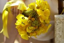 Dream Wedding / by Debra Honeycutt