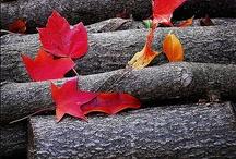 Осенний лист и др.