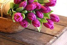 love tulips