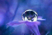 Color :: Purple / by Marina Mercadante Rosa