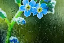Blue bell Rain