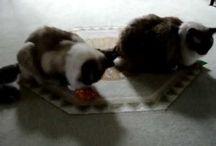 Honeysuckle Cat Toys