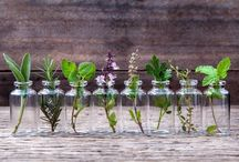 Erbe e piante