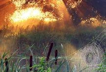 Spiderweb Pond, Wisconsin, photo via angie.