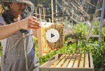 HOMESTEADING-BEE KEEPING / by Joanne Erickson