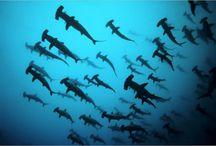 Diving / diving le monde