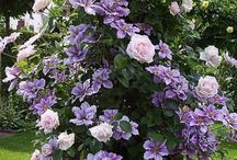 Blomster og planter