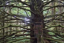 galerie stromů