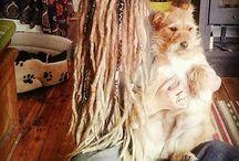 Dreads / #dreads #dreadshare #dreadlock