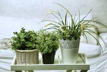 Jardin et plante