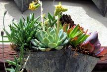 Succulents / by Lydia Billman