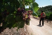 Trek&Wine in Priorat