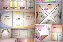 Education - Interactive Notebooks