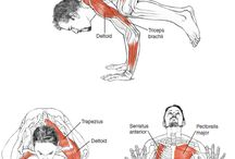 Asanas + musculos
