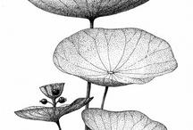 Botanic: