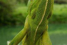 Reptile..