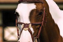 Horses x