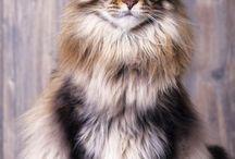gorjus cats