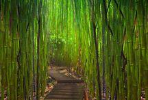 Green / by Judy Vardon