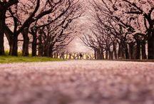Japan - My Love