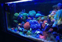 Aquarium / Todo sobre acuario marino
