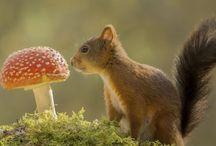 Futter: Pilze