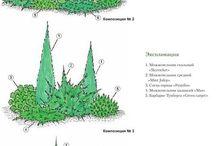 Растения на дачу