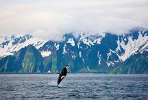 Alaska / by Kayla Hinton