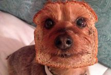 FOOD DOGS & PETS