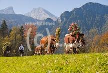 roha-fotothek - Brauchtum / Brauchtum im Berchtesgadener Land, Rupertiwinkel und Chiemgau - fotografiert von der Roha-Fotothek